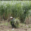 With farms, fruit and feed, Vietnam's tycoons explore agribusiness ventures